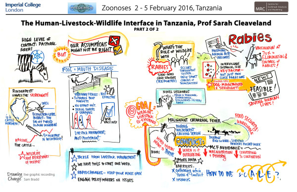 graphic recording Cleaveland-Human-Livestock-Wildlife-Interface-Zoonoses visual summary scribing
