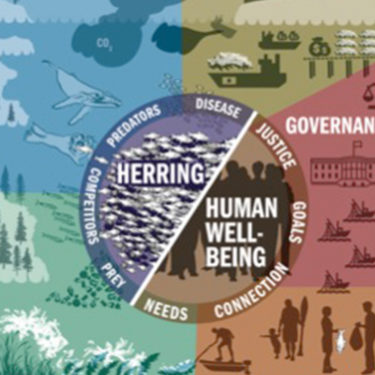 Infographic of the Conceptual Model of the Herring Social-Ecological System